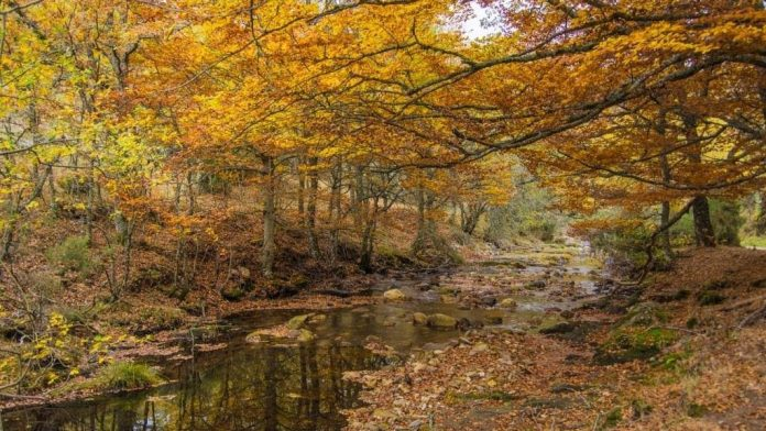 Bosques preciosos que visitar en otoño sin salir de Madrid