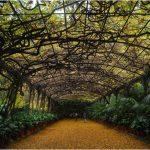 Las mejores actividades que puedes hacer en el Real Jardín Botánico