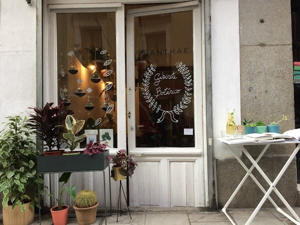 Planthae. Las floristerías con más encanto de Madrid