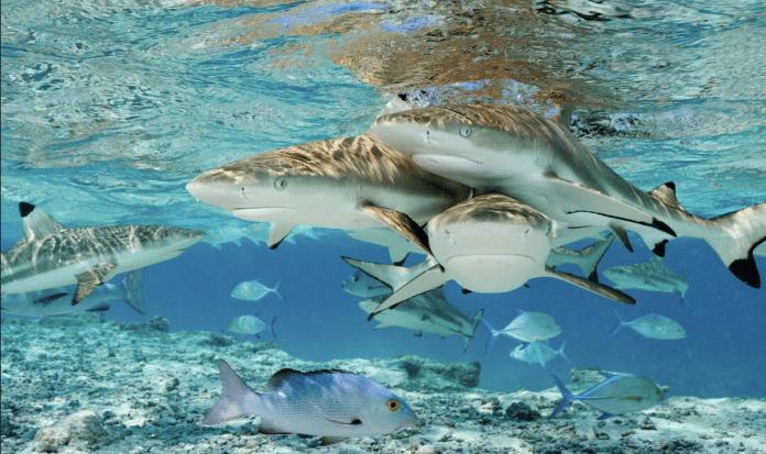 Portada Sharks